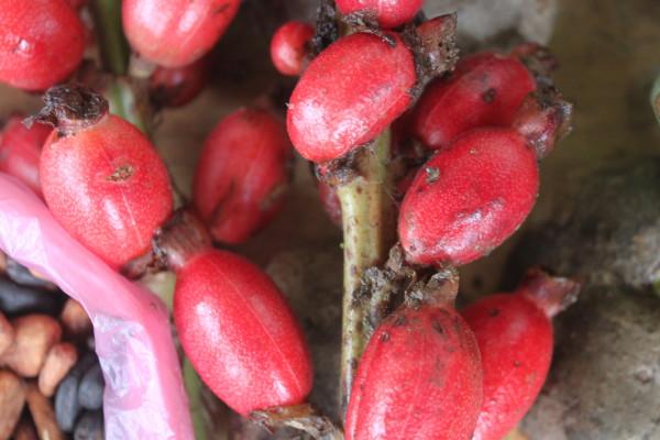 Comienza la Tercera Misión Internacional de Verificación sobre el Derecho a la Alimentación en Guatemala
