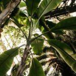 Carta sobre la vulneración de derechos humanos en los países de América Latina productores de banano